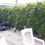 Vrijwilligers helpen met de tuin